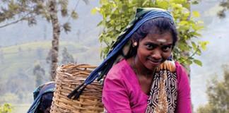 Sri Lankan tea pickers
