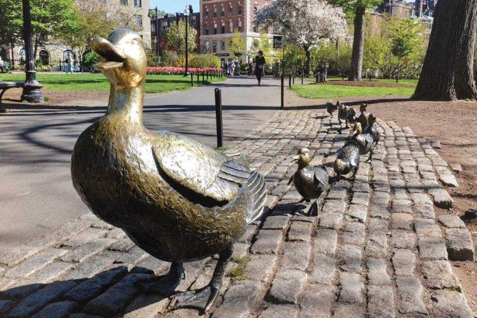 Ducklings SO 13