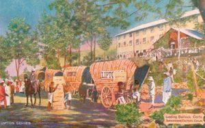 Lipton postcard