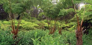 The Tea People of Hawaii